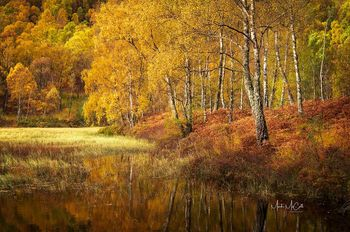 Autumn in the Cairngorms, Scotland