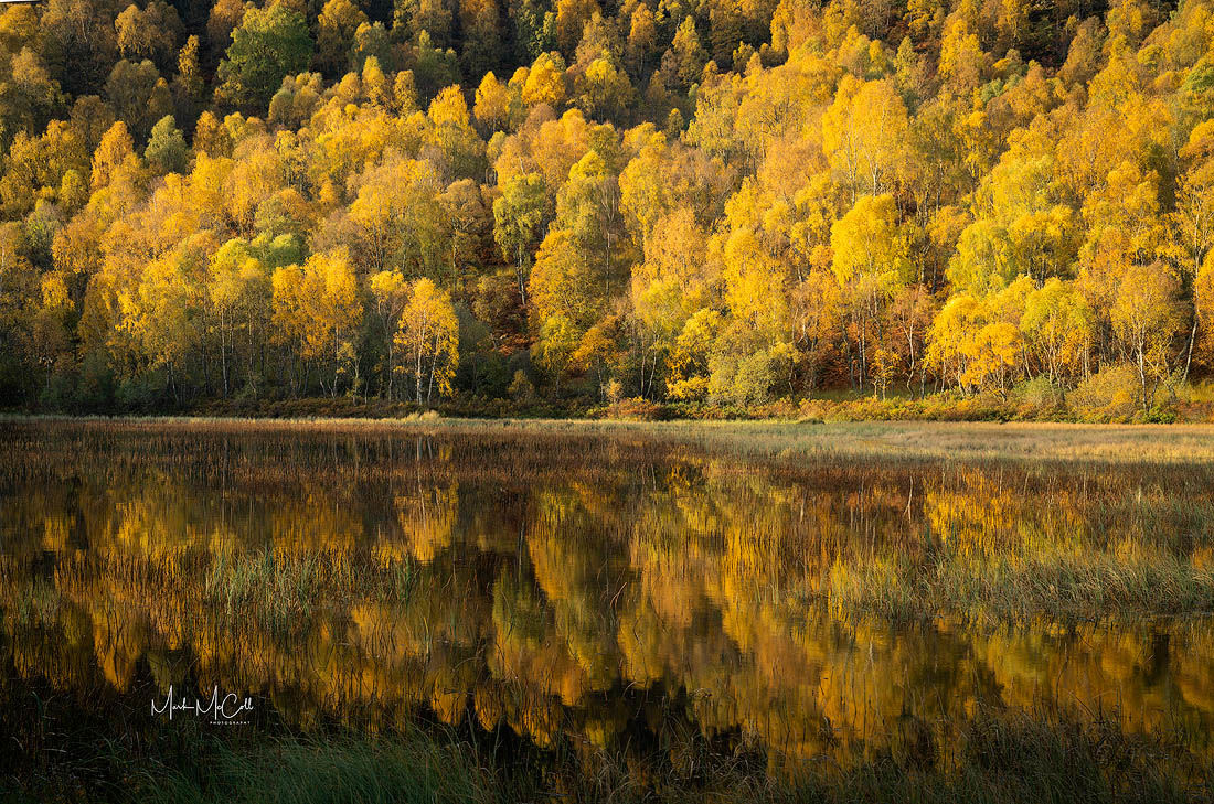 Autumn colour in the Cairngorms, Scotland