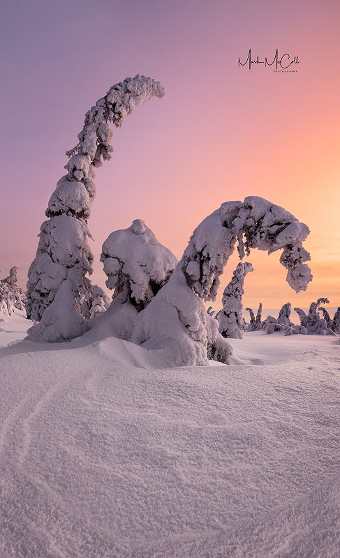 Frozen forest at Dawn, Finland