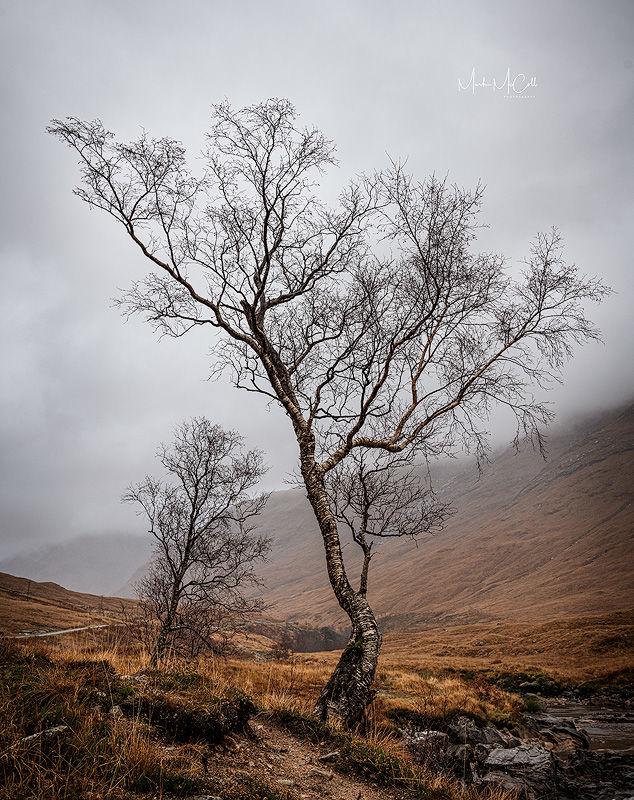 Highland birch, Scottish Highlands