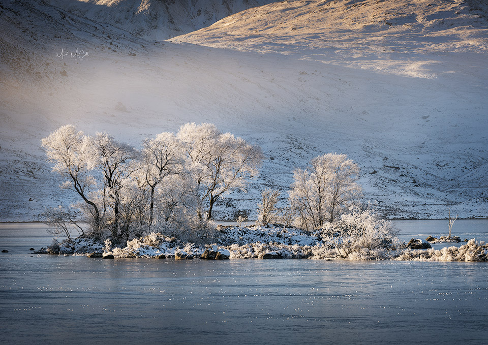 Hoarfrosted trees, Lochan na h-achlaise, Rannoch Moor, Glencoe, Scotland