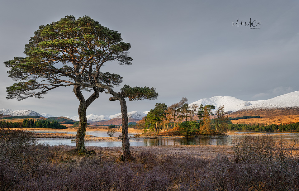 Loch Tulla Pines, near Glencoe, Scotland