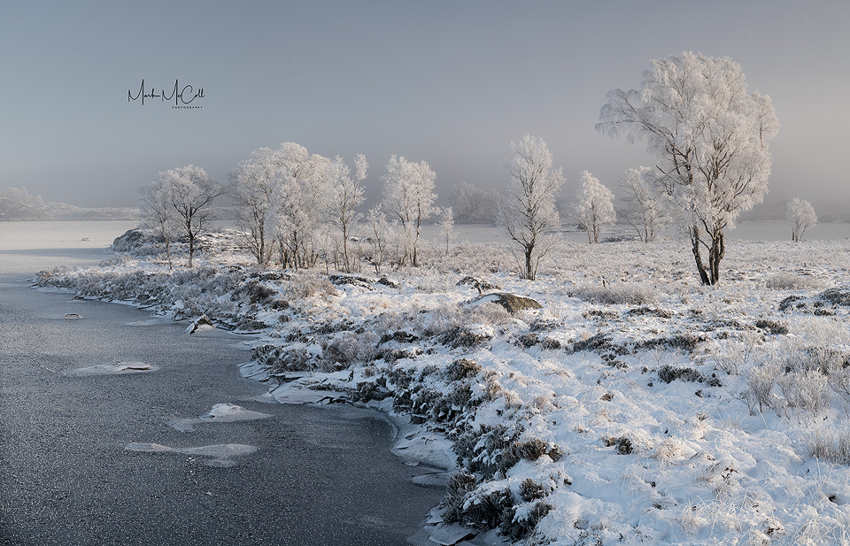 Hoarfrosted trees in the mist, Loch Ba, Rannoch Moor, Glencoe, Scotland