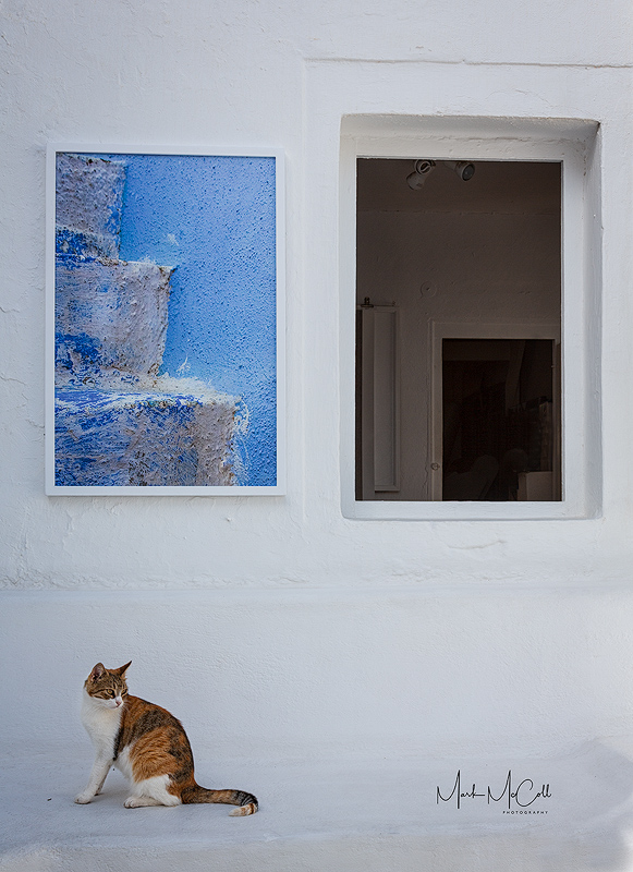 Santorini cat
