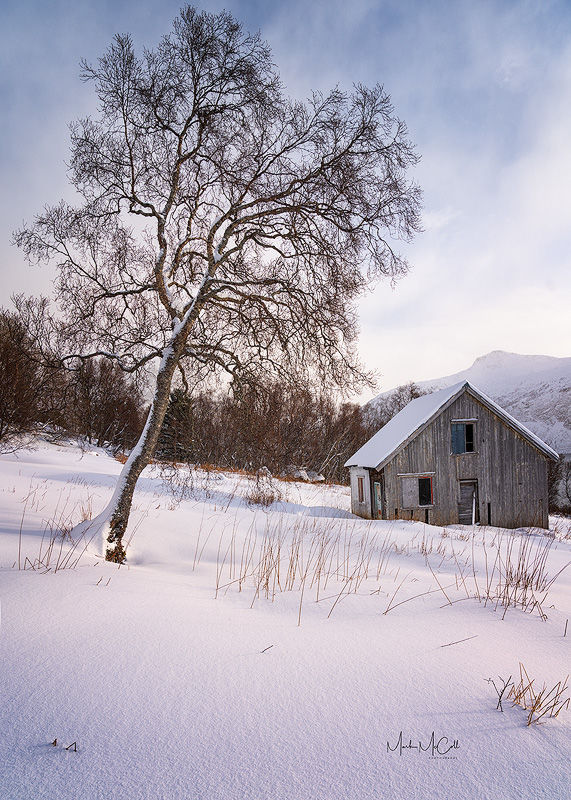 Barn and tree, Senja, Arctic Norway