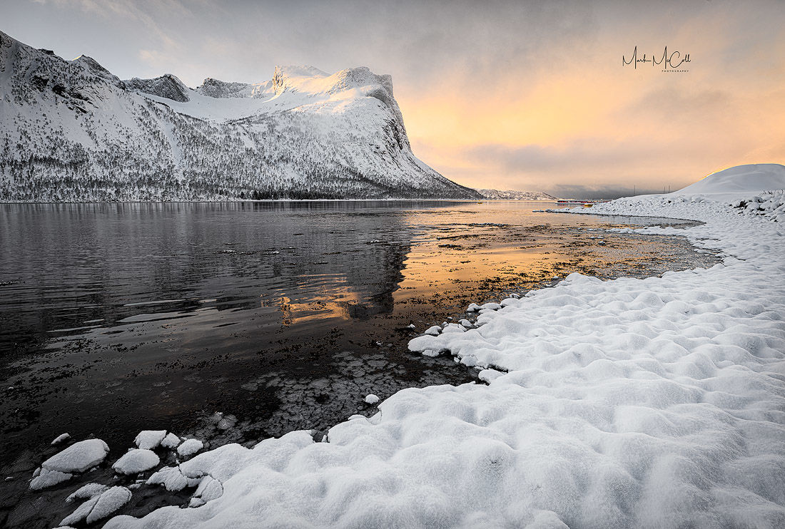 Arctic gold, Senja, Norway