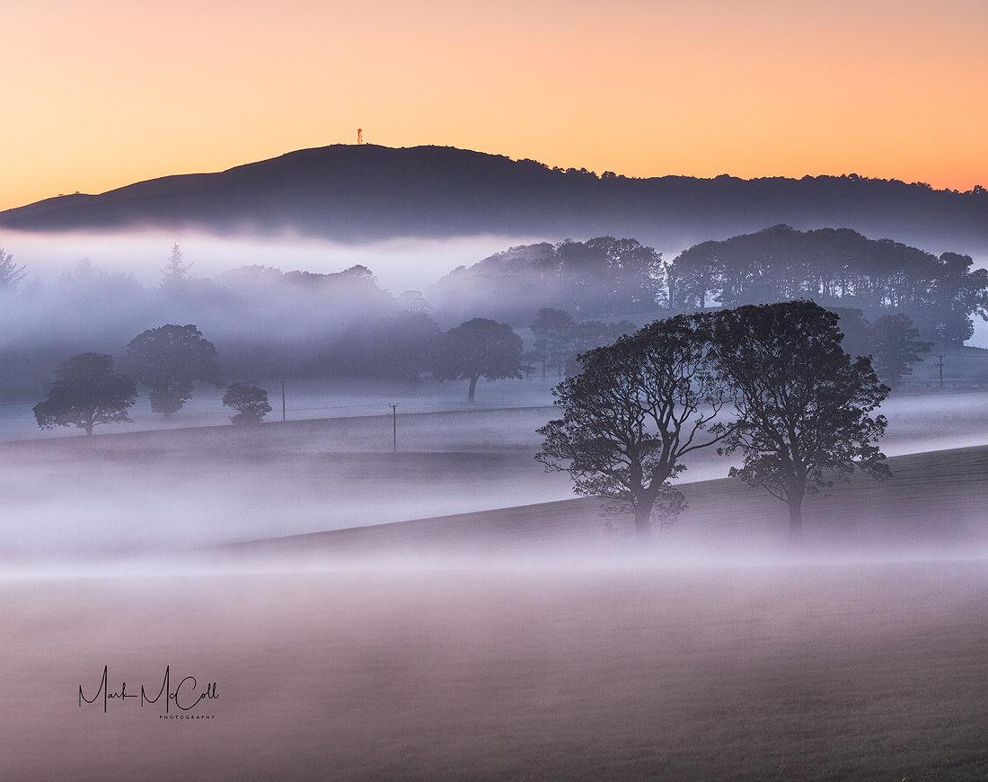 Mist and trees, West Kilbride, Ayrshire