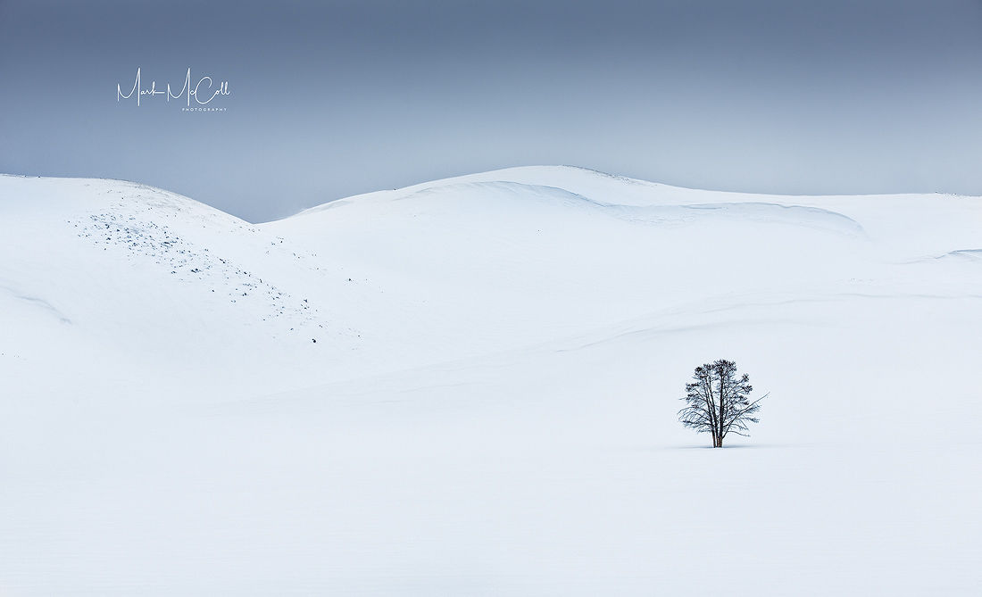 Solitude, Yellowstone NP, Montana