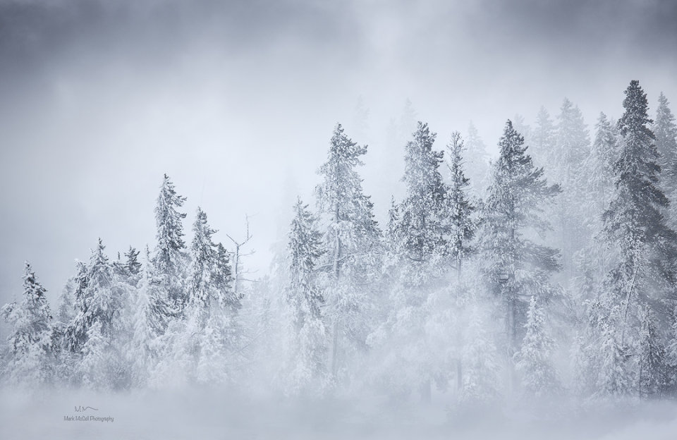 The frozen forest, Yellowstone NP, Montana