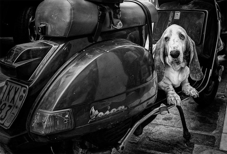 Canine alarm, Crete