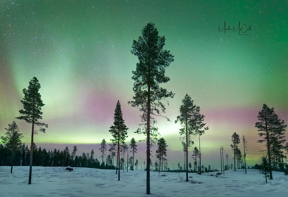 Forest Aurora, Kiruna, Sweden