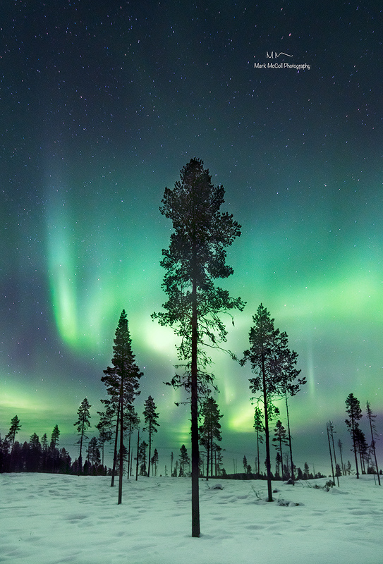 Forest aurora, near Kiruna, Sweden