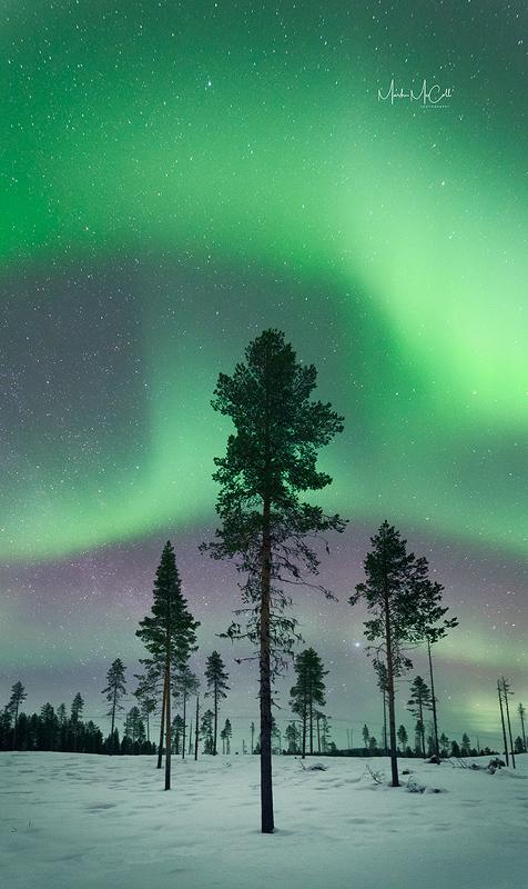 Forest aurora 2, Kiruna, Sweden