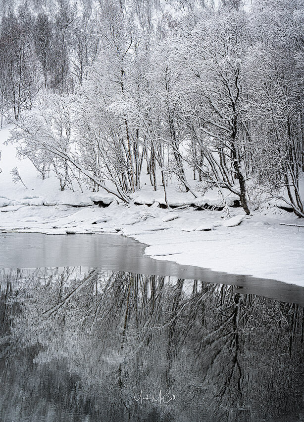 Winter trees and reflections, Arctic Norway