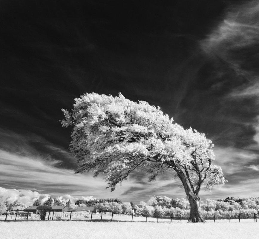 Shapely tree, Ayrshire