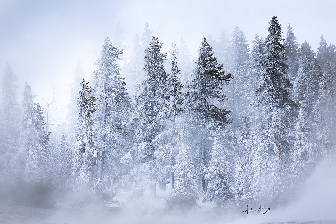 Frozen forest, Yellowstone NP, Montana