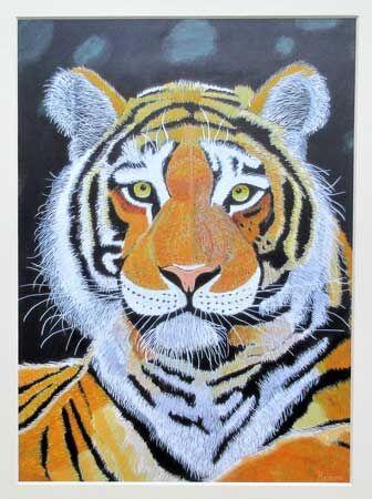 Tiger Spartacus