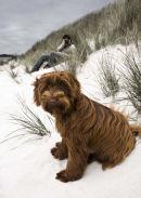 Maisie on Lower Town Beach