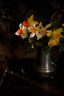 Daffodils, Cotehele