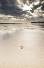 Shell on Oxwich Bay