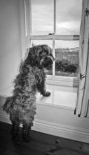 Maisie at the Window