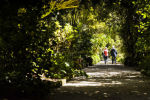 Walking in Tresco Gardens