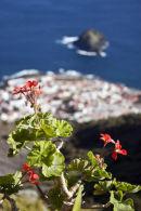 Flowers, Tenerife