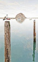 Seagull & Morro Rock