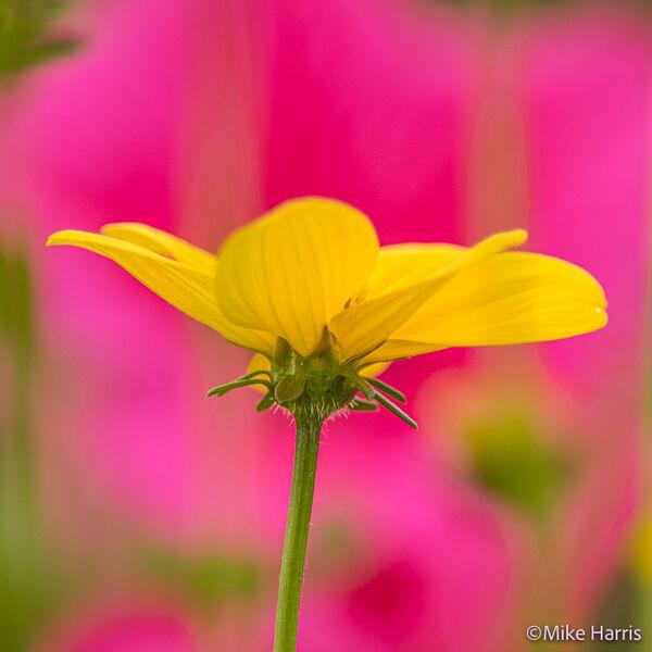 Malton In Bloom