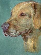 Dog Portrait of Betty