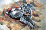 lindy Black labrador