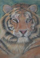 Tiger portrait in pastel