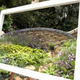 Garden through a frame