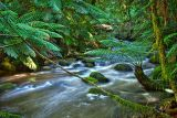 Ferny Creek