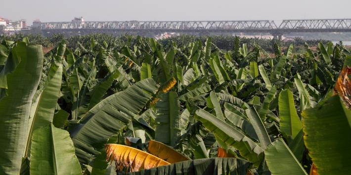 Chuong Duong Bridge