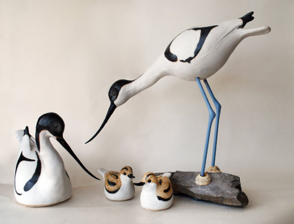 Avocets and young