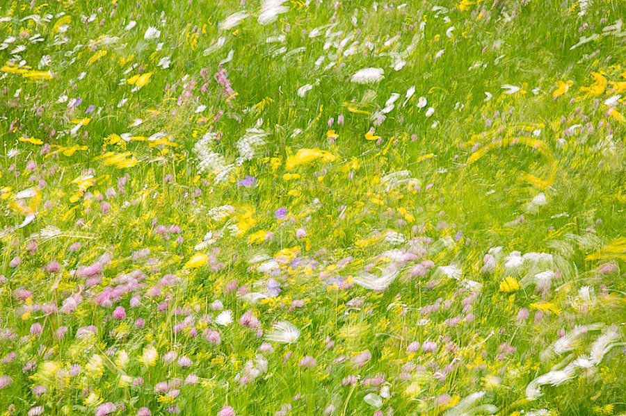 Moments in a Swiss Meadow