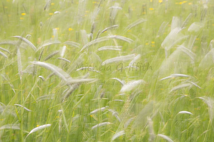 Moments in a Staffordshire Meadow