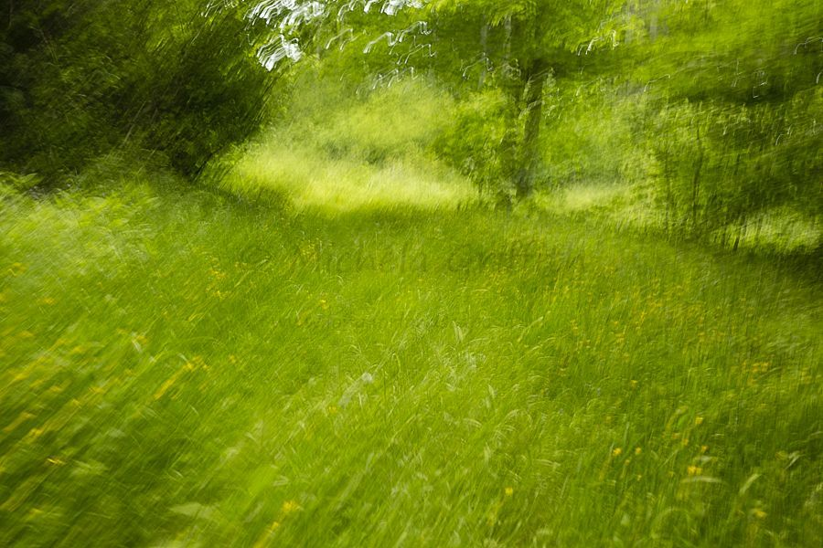 And Verdant Green Meadow