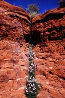 Filet de vie - Sedona, Arizona