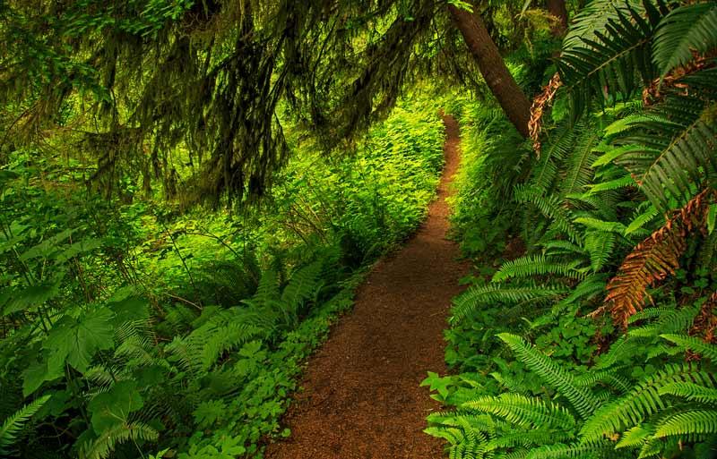 Sentier dans la forêt pluviale côtière 2
