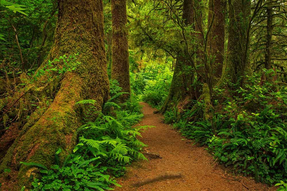 Sentier dans la forêt pluviale côtière 1