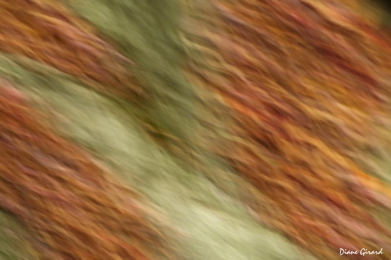 Chevelure d'automne