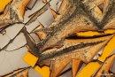 Art nature - Diane Girard