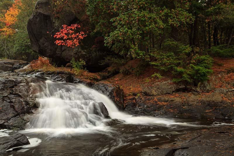 Érable et cascade à l'automne