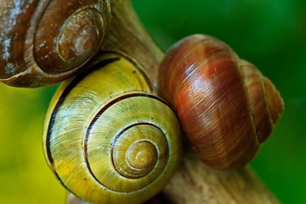 Trio d'escargots