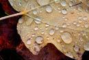 Feuille d'automne après la pluie