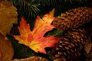 Feuille d'érable et pommes de pin à l'automne