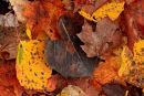 Pot-pourri de feuillles d'automne