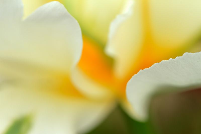 Abstraction de fleur blanche et jaune